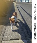 Small photo of The Ginger cat walking along street in the morning with ray of sunlight and shadow. Yobuko, Saga, Kyushu, Japan