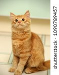 Stock photo red fluffy young cat sitting on the floor 1090789457