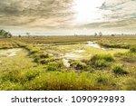 beautiful scene of empty rice... | Shutterstock . vector #1090929893
