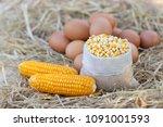 chicken eggs quality organic... | Shutterstock . vector #1091001593