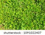 green grass. top view | Shutterstock . vector #1091022407