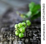 gooseberry growing in spring | Shutterstock . vector #1091349683
