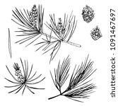 hand drawn pine branch. vector...   Shutterstock .eps vector #1091467697