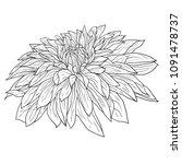 beautiful monochrome sketch ... | Shutterstock . vector #1091478737