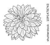 beautiful monochrome sketch ... | Shutterstock . vector #1091478743