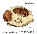 preserved trilobite specimen.... | Shutterstock .eps vector #1091534423