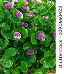 artificial flower image   Shutterstock . vector #1091660423
