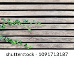 pale lath with green top leaves ...   Shutterstock . vector #1091713187