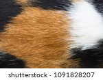 close up white  brown and black ... | Shutterstock . vector #1091828207