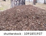 the ant colony | Shutterstock . vector #1091851937
