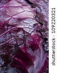 Red cabbage close up - stock photo