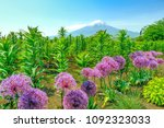 pink round flowers and mt. fuji | Shutterstock . vector #1092323033