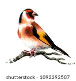 watercolor painting of a... | Shutterstock . vector #1092392507
