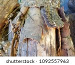 pile of firewood. preparation... | Shutterstock . vector #1092557963