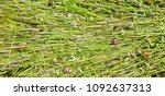 background freshly cut grass.... | Shutterstock . vector #1092637313