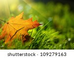 Autumn Leaf On Green Grass ...
