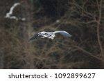 grey heron  ardea cinerea | Shutterstock . vector #1092899627