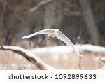 great egret  ardea alba | Shutterstock . vector #1092899633