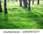 green grass and trees. sunny...   Shutterstock . vector #1092957377