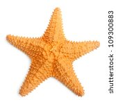The Caribbean Starfish On A...