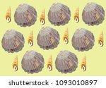 shells on the shore. for summer ...   Shutterstock .eps vector #1093010897