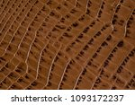crocodile leather textured... | Shutterstock . vector #1093172237