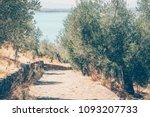mediterranean  olive grove.... | Shutterstock . vector #1093207733