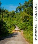 an asphalt road into the jungle. | Shutterstock . vector #1093214213