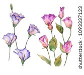 pink and purple eustoma. floral ...   Shutterstock . vector #1093337123