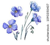 blue flax. floral botanical... | Shutterstock . vector #1093350407