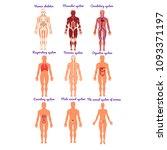 different human organ system... | Shutterstock .eps vector #1093371197