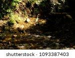 landscape for an egret under... | Shutterstock . vector #1093387403