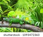 cute green iguana  latin  ... | Shutterstock . vector #1093472363