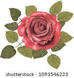 red roses _ stylized vector... | Shutterstock .eps vector #1093546223