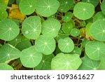 green leaf background | Shutterstock . vector #109361627