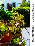 beautiful ceramic flower pot on ...   Shutterstock . vector #1093675373