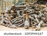 firewood the collection of... | Shutterstock . vector #1093944167