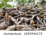 firewood the collection of... | Shutterstock . vector #1093944173