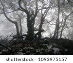 winter wood  fog and haze ... | Shutterstock . vector #1093975157