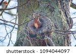 squirrel in it s tree cave | Shutterstock . vector #1094044097
