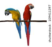 3d Render Of 2 Scarlet Macaws...
