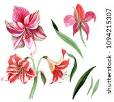 pink striped amaryllis. floral... | Shutterstock . vector #1094215307
