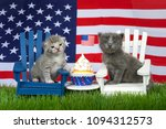 Stock photo adorable small fluffy grey kitten sitting on a white chair grey and white tabby on blue chair in 1094312573