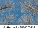snow on branches against the... | Shutterstock . vector #1094320463