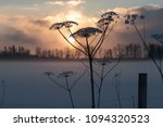 dry hogweed in winter on a... | Shutterstock . vector #1094320523