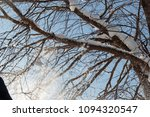 large branches of a tree... | Shutterstock . vector #1094320547