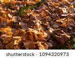 fallen trees in autumn in the... | Shutterstock . vector #1094320973
