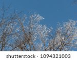snow on branches against the... | Shutterstock . vector #1094321003