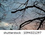 dry tree branches against the... | Shutterstock . vector #1094321297