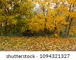 fallen leaves and young trees... | Shutterstock . vector #1094321327